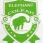 ELEPHANT DE COLEYAH